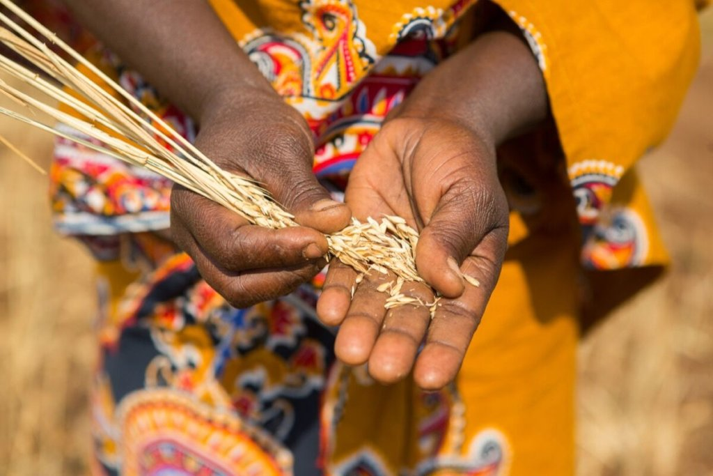 Economic Empowerment for Women in Tanzania