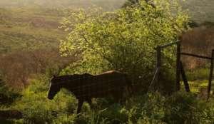 The new fenced paddock at Hluhluwe-Imfolozi