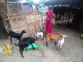 Hamida with her goats