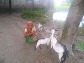 Jariman with her goats