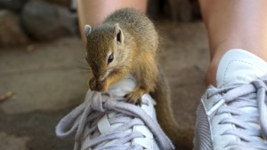 George the baby squirrel
