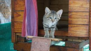 Bonnie the Wild Cat