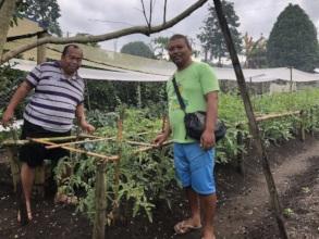 Raising vegetables for incomes