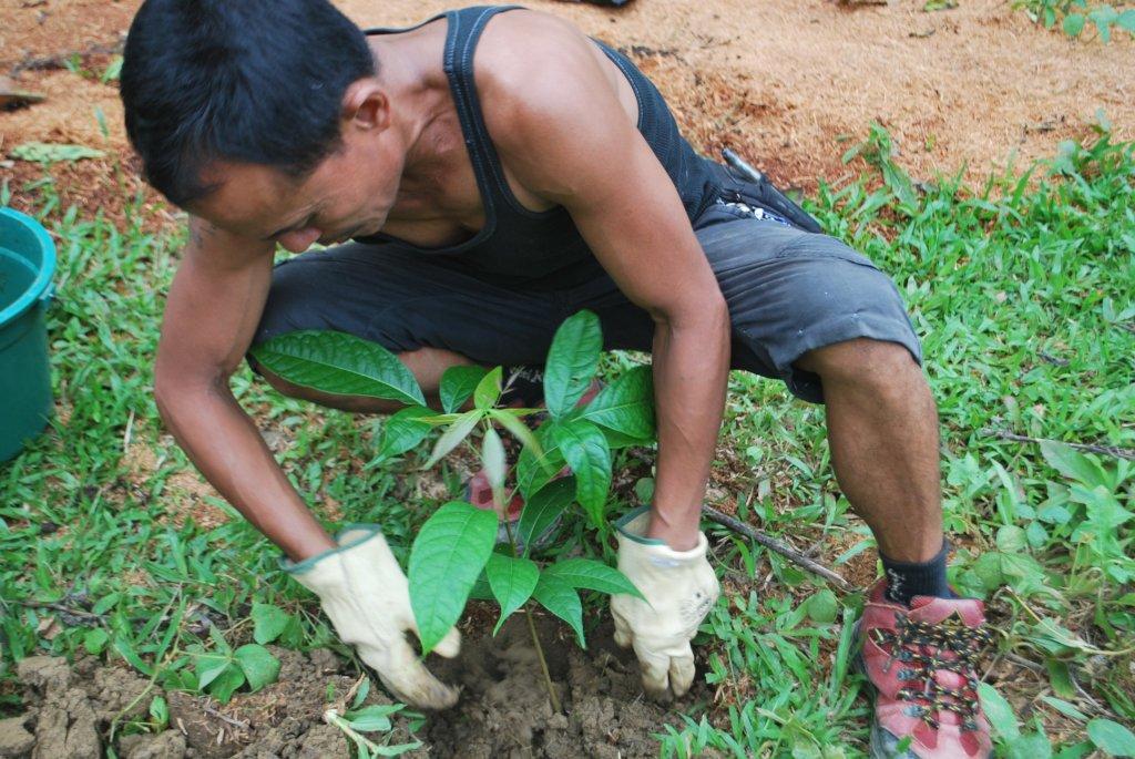 Mindanao Biodiversity Project