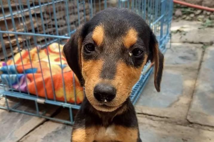 Treat 100 injured Indian street dogs