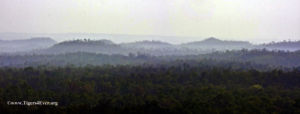 Early morning mists lifting over Bandhavgarh