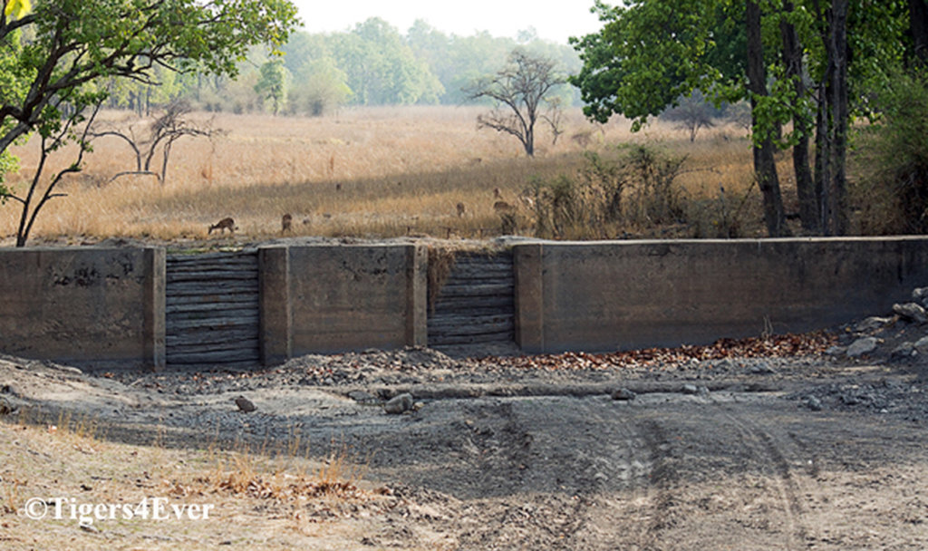 Water for Bandhavgarh's Tigers - Reducing Conflict