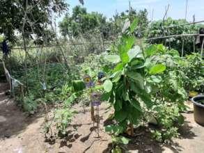 A  small garden in a slum community