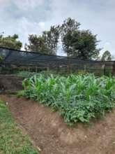 Preparing gardens for demonstration