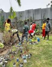 Tree /flower planting