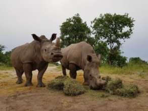 Gertjie and Matimba