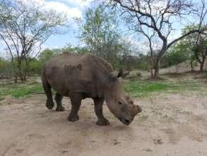 Rhino Nhlanhla at HESC