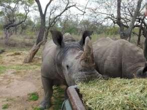 Rhino Balu at HESC