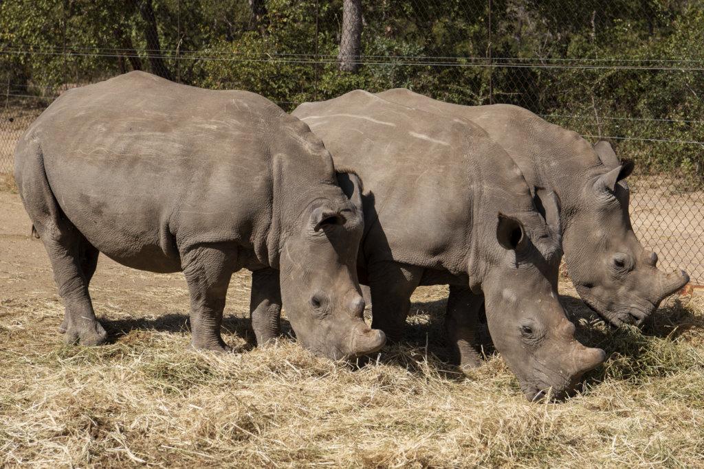 Big Rhino's Need Big Hearts Too.