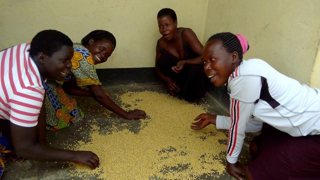 Improving lives of 500 rural farmers in N. Uganda