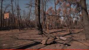Attika wildfires 2018: Recovery support