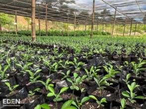 100s of saplings in Nursery before replanting