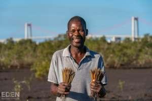 Propagules for Mangroves  - Madagascar & Mozambiq