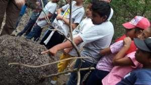 Seventh graders observe termites nest!