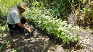 Growing trees for agroforestry
