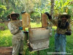 Honey Harvest in Ixcan