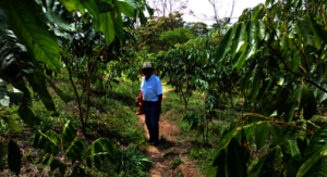Luis on land with year-and-a-half old Inga trees