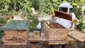 Follow up technical assistance on beekeeping