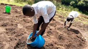 Preparing gardens for vegetable and fruit growing