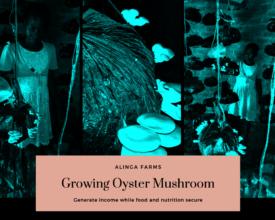 Innovation - Growing Oyster Mushrooms