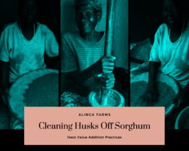 Value Addition - Iteso Cleaning Husks off Sorghum