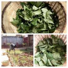 Food and Nutrition Security = Yard Gardening 1