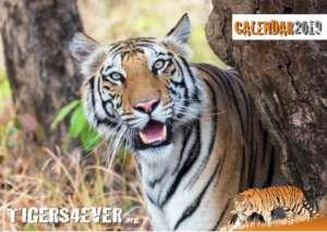Tigers4Ever 2019 Calendar