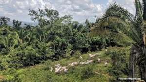 Cattle of small scale farmer