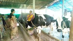 Dairy Farming Success for Mina