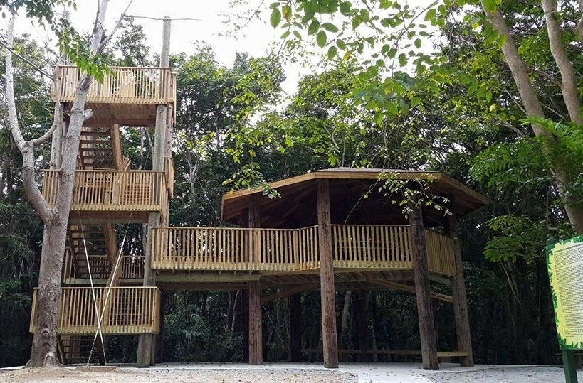 Enable an encounter with a rare Pterocarpus Forest