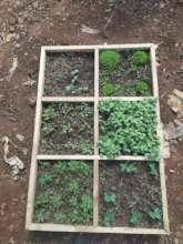 Seedlings beginning to sprout