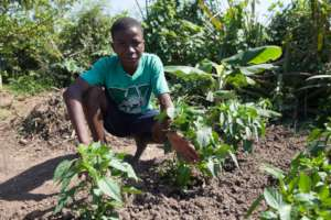 Seeds and Support for School Gardens Worldwide