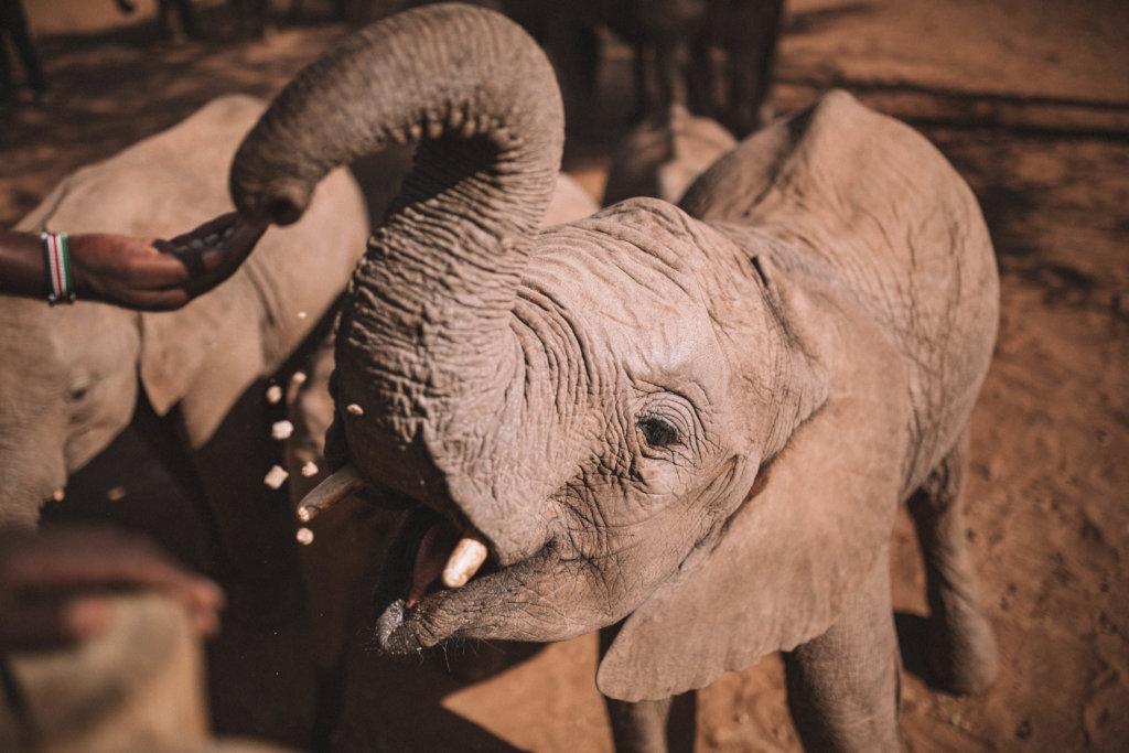 Supplies for Orphans at Reteti Elephant Sanctuary