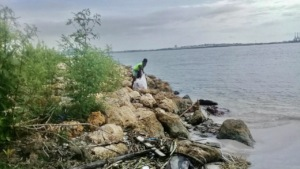 Young boy aids by cleaning the coastal area!