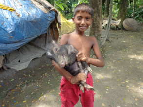 A child with pet piglet