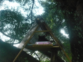 Lakshman in his tree house