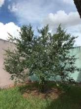 A happy schoolyard tree
