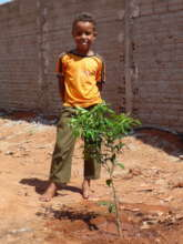 Backyard trees feed and teach kids about trees