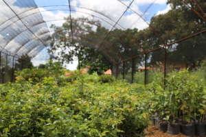 FTPF's partner nursery in Mococa, Brazil