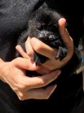 Mowgli's squishy sleep face