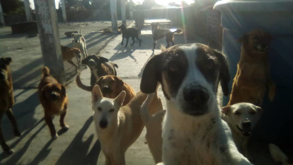 Improve the life of 270 rescued dogs in Venezuela