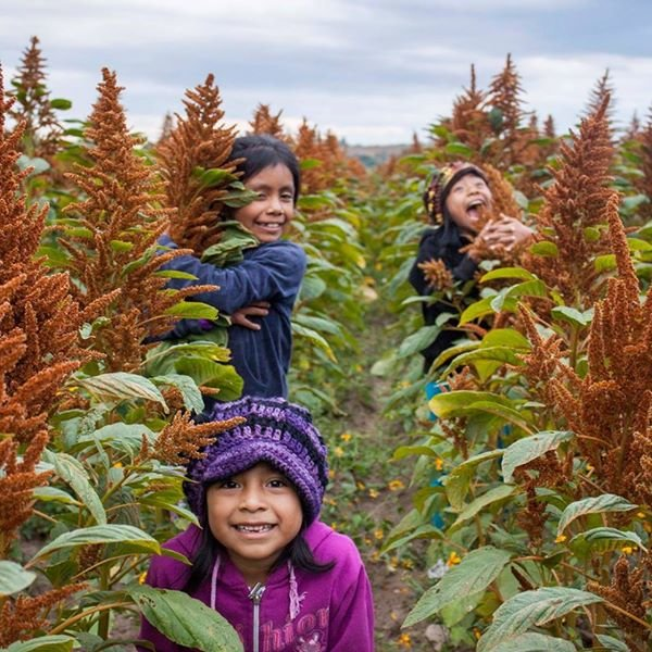 EMPOWER 60 FAMILIES WITH SUSTAINABLE AGRICULTURE