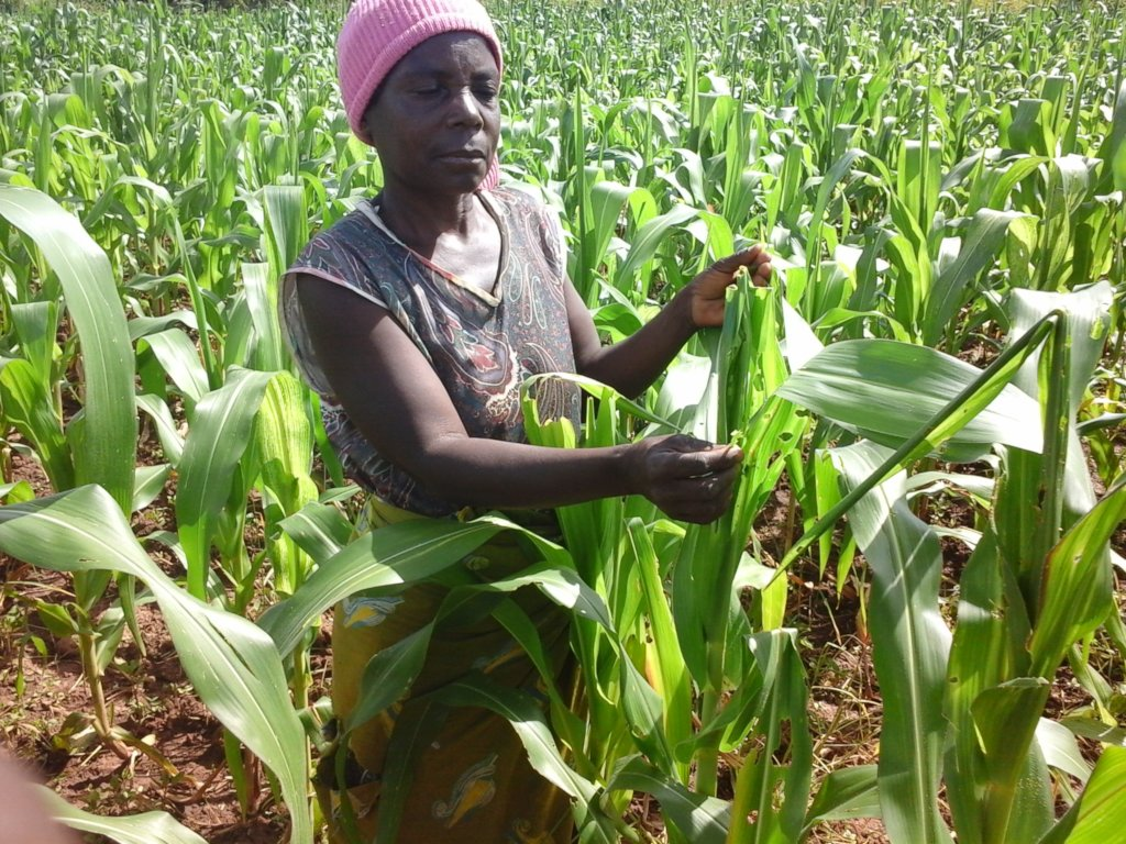 Break Near-starvation Cycle for Congolese Farmers