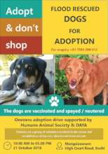 Adoption drive for the flood rescued dogs