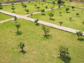 plan of tree plantation
